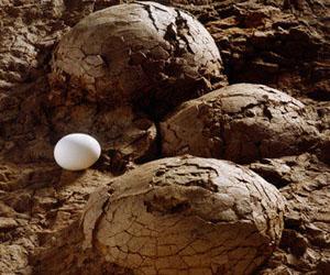 huevos-dinosaurio