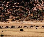 Desierto de Ogaden. Foto: Ismael Francisco/Cubadebate.