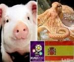 cerdo-sucesor-del-pulpo-paul