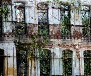 La vegetación cubre algunas ruinas de La Habana. Foto: Ladyrene Pérez/Cubadebate.
