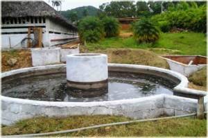 Cuba apuesta por el biogás como fuente de energía
