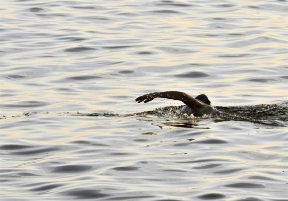 Nadadora Penny Palfrey a mitad de camino entre Cuba y EEUU