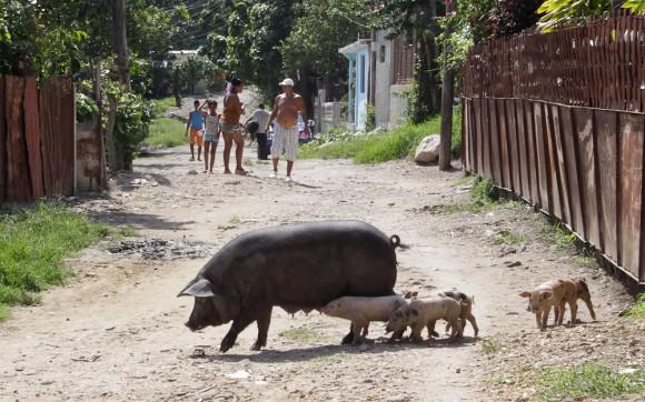 Paseo vespertino. Foto: Alejandro Ramírez Anderson/ Cubadebate.