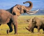 Animales salvajes de Namibia