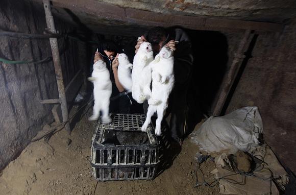 Niños egipcios muestran conejos que les ha dado a un hombre palestino (no es visible en la imagen) en un túnel subterráneo que une el sur de la Franja de Gaza a Egipto el 21 de noviembre de 2010, los egipcios y los palestinos transforman la red de túneles que una vez sirvió como un salvavidas para Gaza en su canal de exportación único. (Said Khatib / AFP / Getty Images)