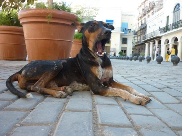 perros-callejeros-3