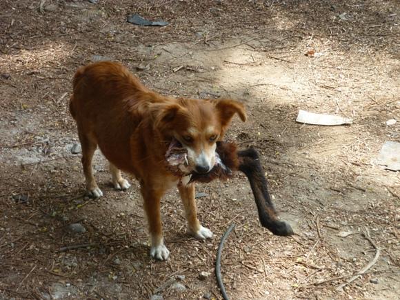 perros-callejeros-4