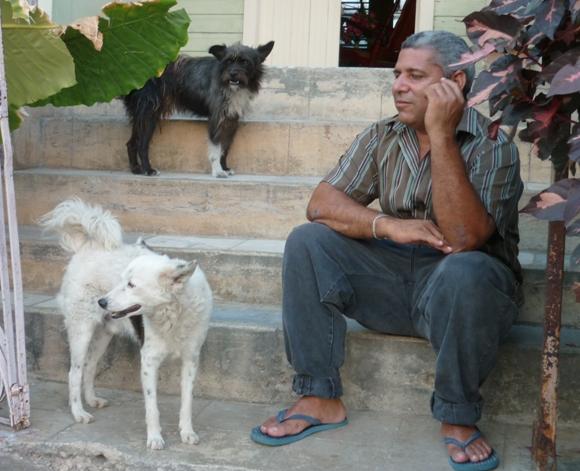 perros-callejeros-6