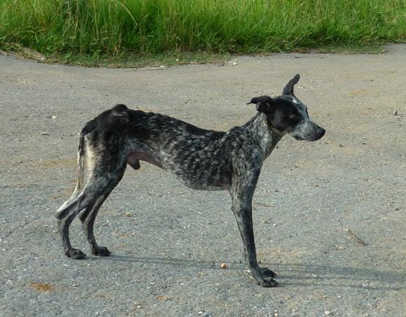 perros-callejeros-7