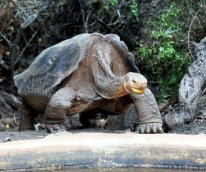 tortuga-diego