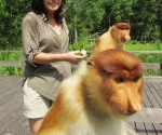 La presentadora Lucy Cooke en Borneo con monos narizones.