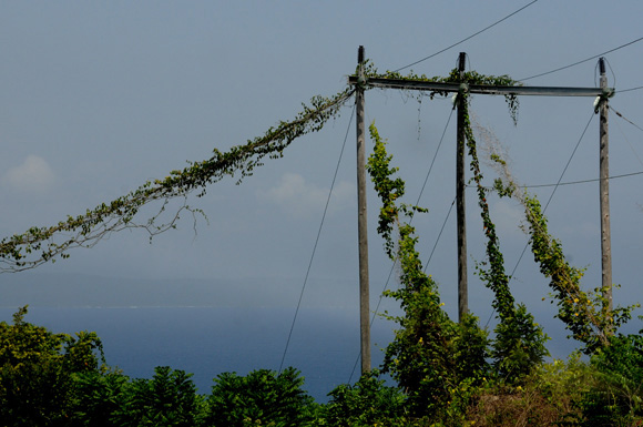 Las plantas se apoderan del tendido eléctrico camino a Baracoa. Foto: Ladyrene Pérez/Cubadebate.