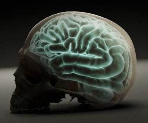 Estudio revela la verdadera función de la serotonina en el cerebro