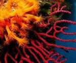coral-rojo