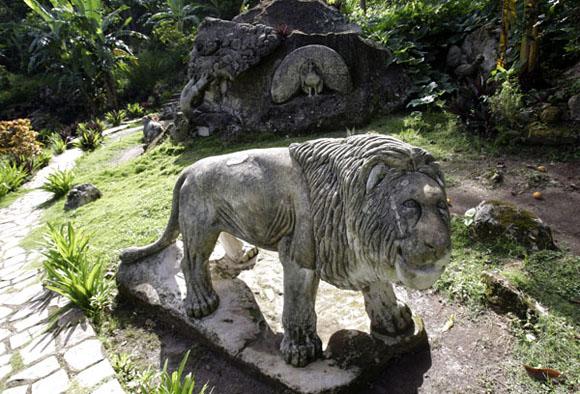 El Rey de la selva. Foto: Ismael Francisco/Cubadebate