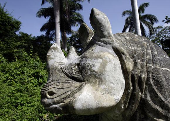 Rinoceronte. Foto: Ismael Francisco/Cubadebate