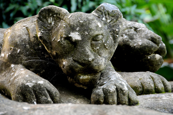 Cachorros de leones. Foto: Ladyrene Pérez/Cubadebate