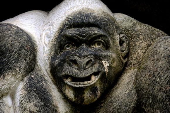 Gorila. Foto: Ladyrene Pérez/Cubadebate