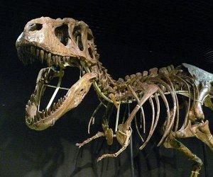 Paleontólogos descubren en China nueva especie de titanosaurio