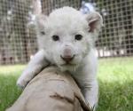 El cachorro, nacido el 14 de septiembre.
