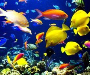 El calentamiento global afectará movimiento y tamaño de los peces