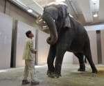 elefante-que-habla