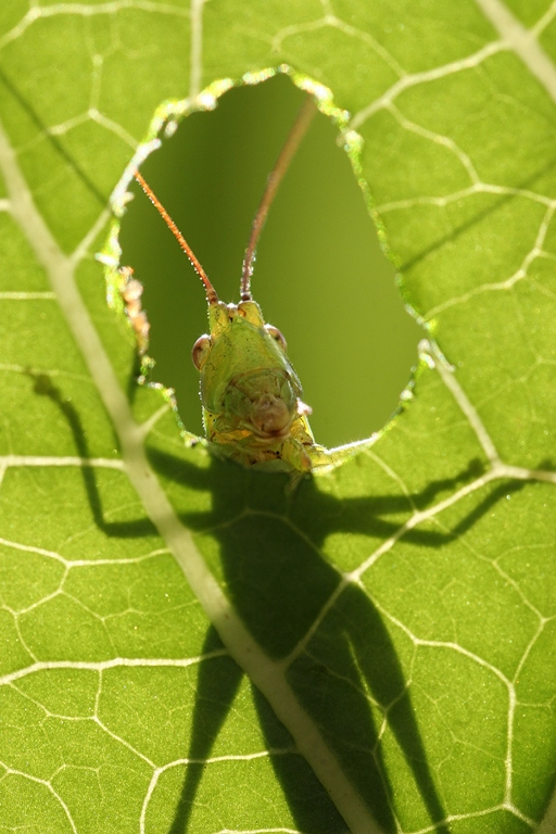 Insectos durante un día lluvioso. FOTO: Vadim Trunov