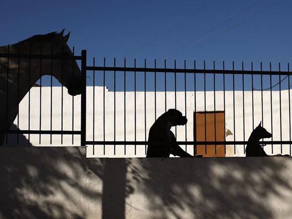 Atención animal. Foto: REUTERS/Jon Nazca.