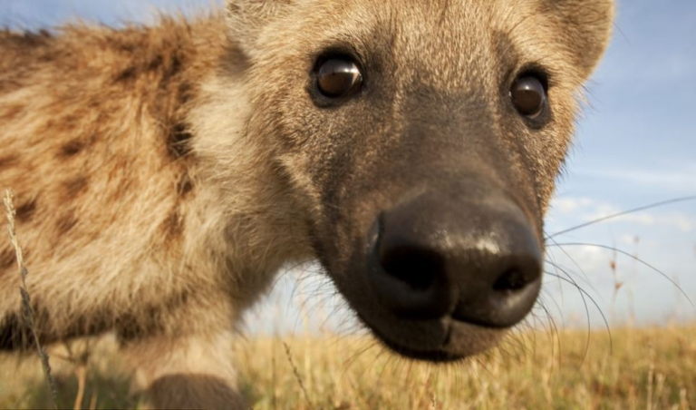 Bellas imágenes de la fauna africana. FOTO: Anup Shah/ Dailymail