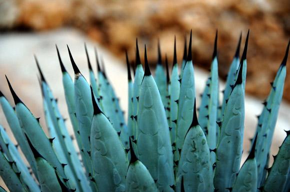 Festival Nacional de Cactus y Suculentas 2012 en el Jardín Botánico Nacional. Foto: Ladyrene Pérez/Cubadebate.