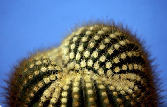 Festival Nacional de Cactus y Suculentas 2012 en el Jardín Botánico Nacional. Foto: Ismael Francisco/Cubadebate.