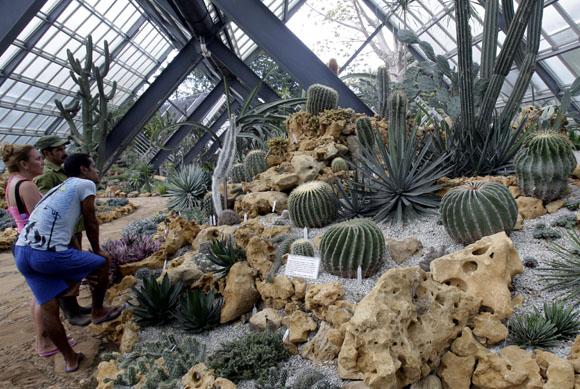 Festival nacional de cactus y suculentas fotorreportajes for Jardines con cactus