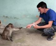 El mono picando cigarros  Santo Tomás. Foto: Ismael Francisco/Cubadebate.