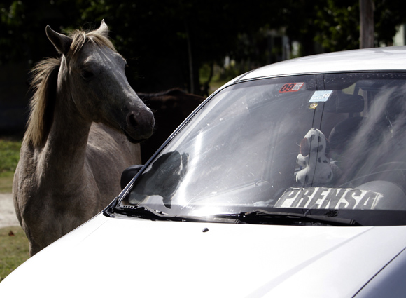 La despedida del caballo en Santo Tomás. Foto: Ismael Francisco/Cubadebate.