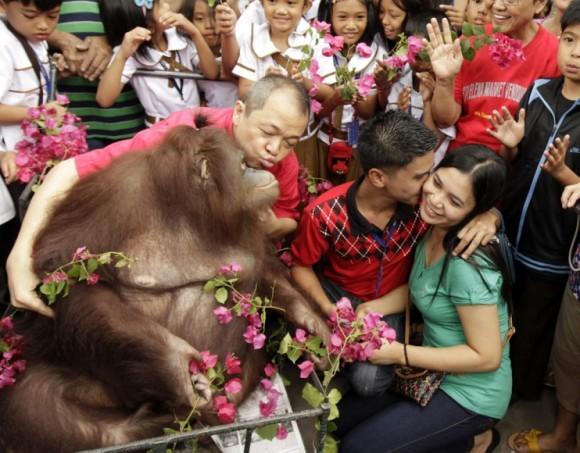 Una pareja posó junto a un orangután un día antes de la celebración del Día de San Valentín en el zoológico de Malabon en Filipinas. Foto: Francis R. Malasig / EFE