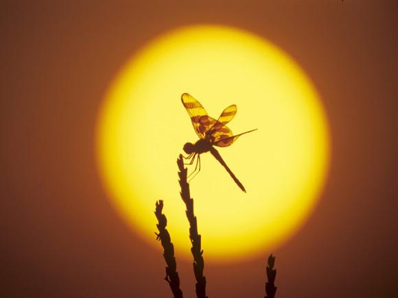 Foto: Blog: Ecología, Sostenibilidad y Medio Ambiente.