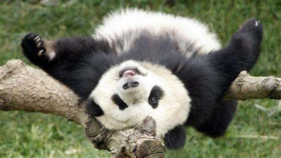 Foto: National Zoo.