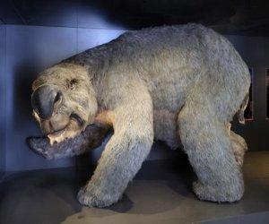 La llamada megafauna australiana estaba compuesta por marsupiales gigantes como el diprotodonte -del tamaño de un rinoceronte-, enormes aves, reptiles y monotremas.