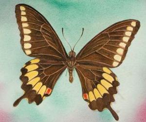 mariposa-antonio-guerrero06