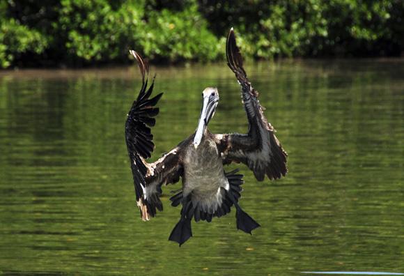 Analizarán en Cuba seguridad biológica en medio ambiente.