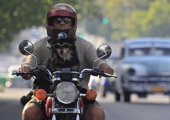 Popy, a 14-year-old dog, enjoys the ride as his owner Abel cruises around Havana