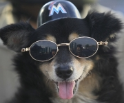 Popy, a 14-year-old dog, posses for a photo in Havana