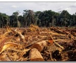 amazonia Deforestación