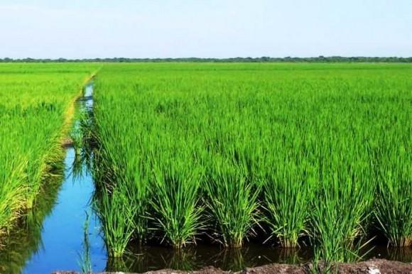 La agricultura cubana consume el 60% del agua que se utiliza en el país