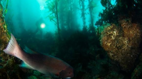 Hallan los restos de un bosque prehistórico en el fondo del golfo de México Bosque-marino-580x325