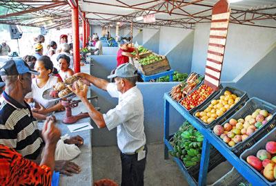 Fueron constituidas 99 cooperativas en los mercados agropecuarios de La Habana, Artemisa y Mayabeque.