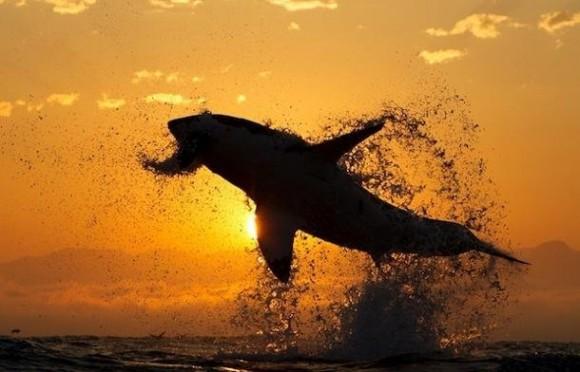 86f87d9a-d1dc-4b9b-94c6-792dc704988e_mundo-animal-mejores-fotos-27052013