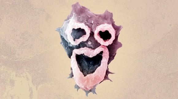 La ameba se introduce en el cuerpo a través de las fosas nasales.