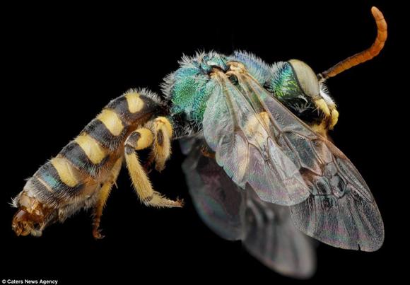 abejas4