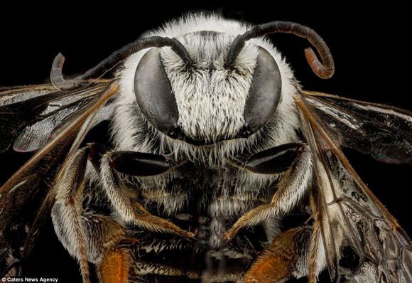 abejas5